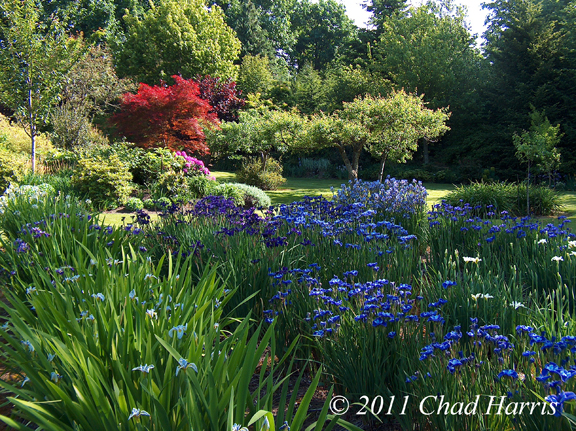 Mt Pleasant Iris Farm, landscaped garden of irises, 2011