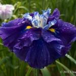 Artesian Spring